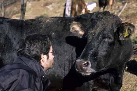 Jvan photographer face to face with a black cow - JBLArts photography