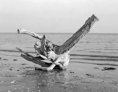 An adrift log on the winter seaside - JBLArts photography